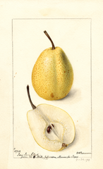 Pears, Texas Iron Clad (1898)