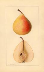 Pears, Michigan U.s. 504 (1936)