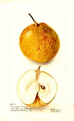 Pears, Crawford W. Long (1903)