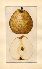 Pears, Easter Beurre