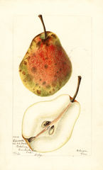 Pears, Epworth (1903)