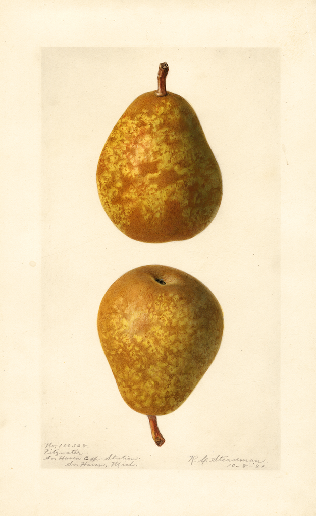 Pears, Fitzwater (1921)