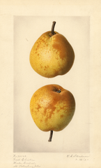 Pears, Good Christian (1920)