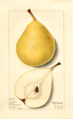 Pears, Howell (1913)