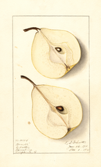 Pears, Howell (1911)