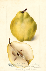 Pears, Johnsons Nameless Winter (1898)