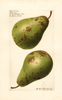 Pears, P. Barry (1921)