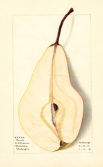 Pears, Pound (1915)