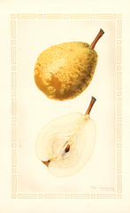 Pears, Shaw (1927)