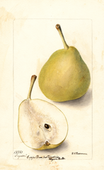 Pears, Snyder (1900)