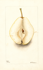 Pears, Rossney (1899)