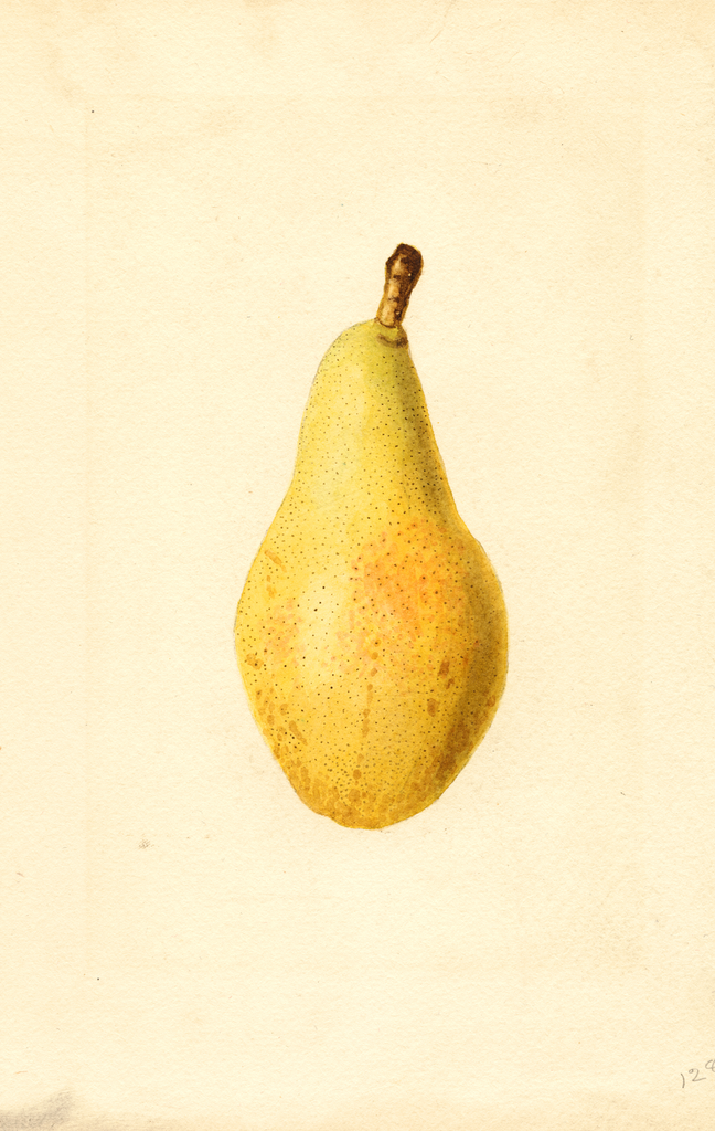 Pears, Kieffer Cross (1922)