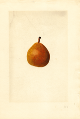 Pears, Kieffer Cross (1917)