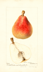 Pears, Lancaster (1896)