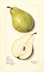 Pears, Lawrence (1914)