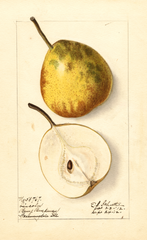 Pears, Lincoln (1912)