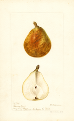 Pears, Lucrative (1897)