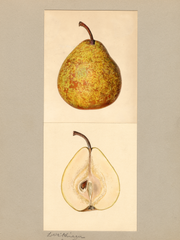 Pears, Winter Nelis (1935)