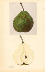 Pears, Winter Nelis (1932)