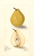 Pears, White Star (1909)