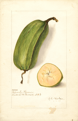 Bananas, Popoulu Hawaii (1907)
