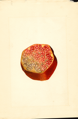 Pomegranates, Wonderful (1911)