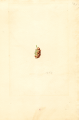 Mulberries, Mulberry (1921)