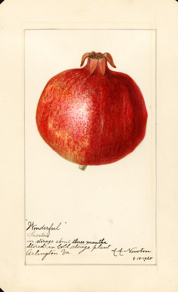 Pomegranates, Wonderful (1920)