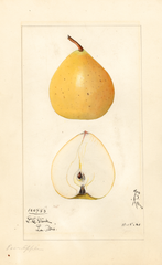 Asian Pear, Pear Apple (1921)