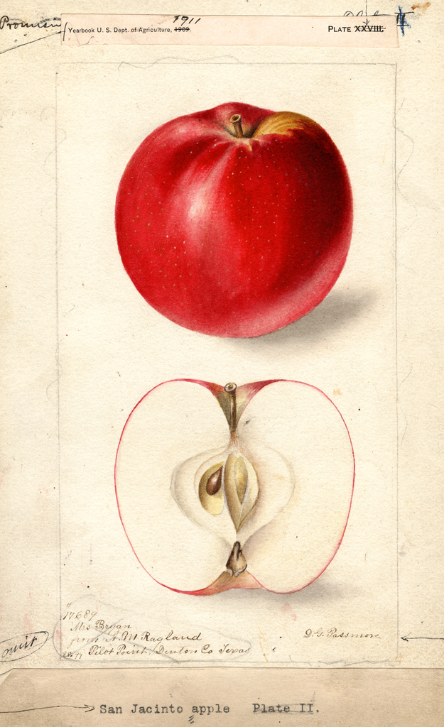 Apples, San Jacinto (1899)