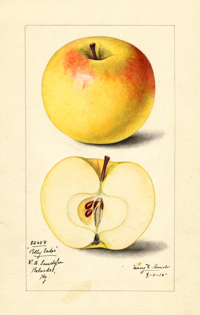 Apples, Polly Eades (1915)