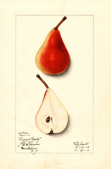 Pears, Vermont Beauty (1913)