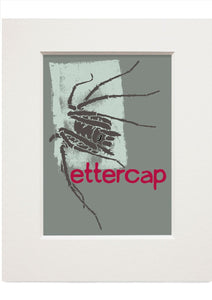 Ettercap – small mounted print - Indy Prints by Stewart Bremner