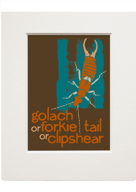 Golach or forkie-tail or clipshear – small mounted print - Indy Prints by Stewart Bremner