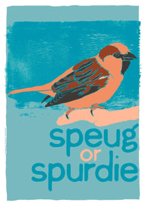 Speug or spurdie – giclée print – Indy Prints by Stewart Bremner