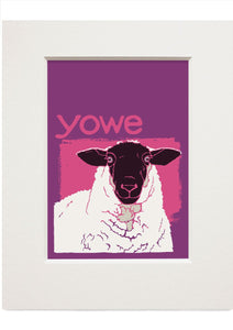 Yowe – small mounted print - Indy Prints by Stewart Bremner