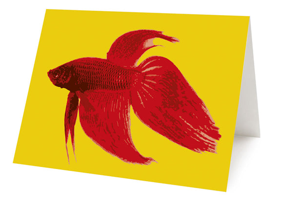 Betta Splendens – card