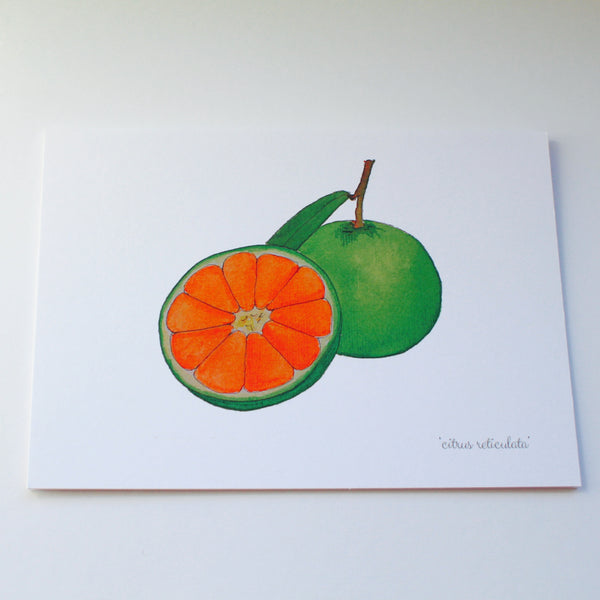 Gift Cards - Original Botanical Watercolours by local Tarbert Artist