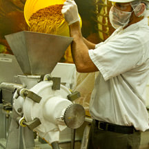 Factory worker processing peanuts