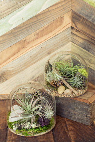 Airplant Terrarium Workshop- Saturday, September 1st at 2PM