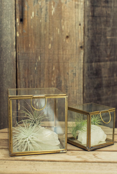 Burnished Brass Terrarium Box