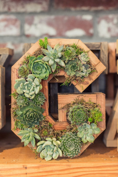 Succulent letters numbers and hearts dig gardens for Soil 5 letters