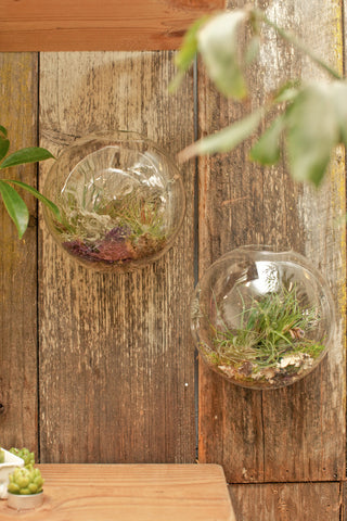 Bubble Wall Terrarium