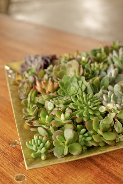 Succulent Cuttings Package