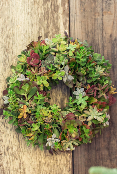 Succulent Wreath Workshop  Offered Saturday, October 7th at 2PM