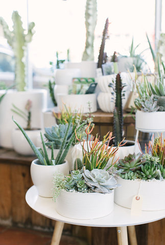 Succulent & Cactus Potted Arrangement Workshop offered Saturday, March 24th at 2PM