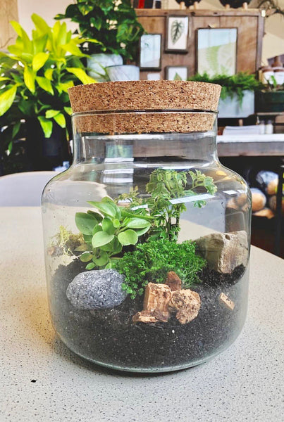 Houseplant Terrarium Workshop, Sat. February 22nd at 3pm