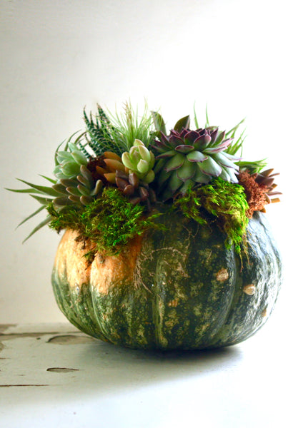 Succulent Pumpkin Centerpieces- Offered Oct. 20th & Nov. 10th at 2pm
