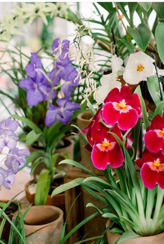 Orchids 101: Repotting & Reblooming Workshop-Saturday, August 24th at 2PM