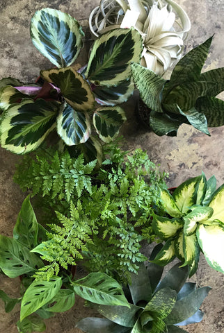Houseplants 101- Saturday, April 20th and June 15th at 2pm
